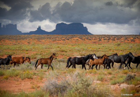 Wild Horses, Monument Valley, Arizona USA